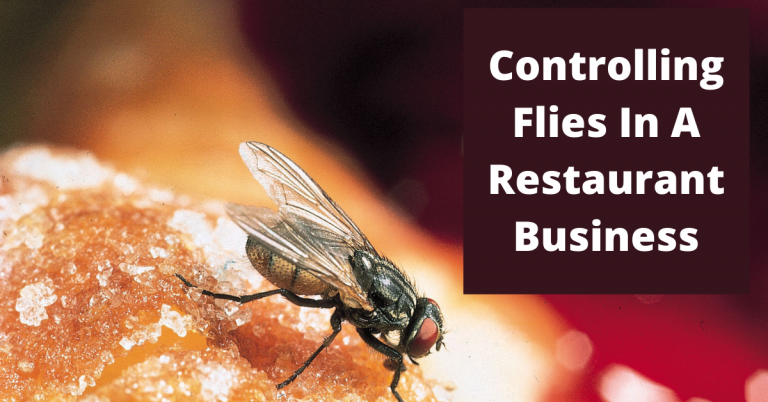 Controlling Flies In your Restaurant Business