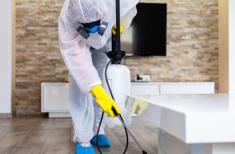 Professional Pest Control Brisbane (2)